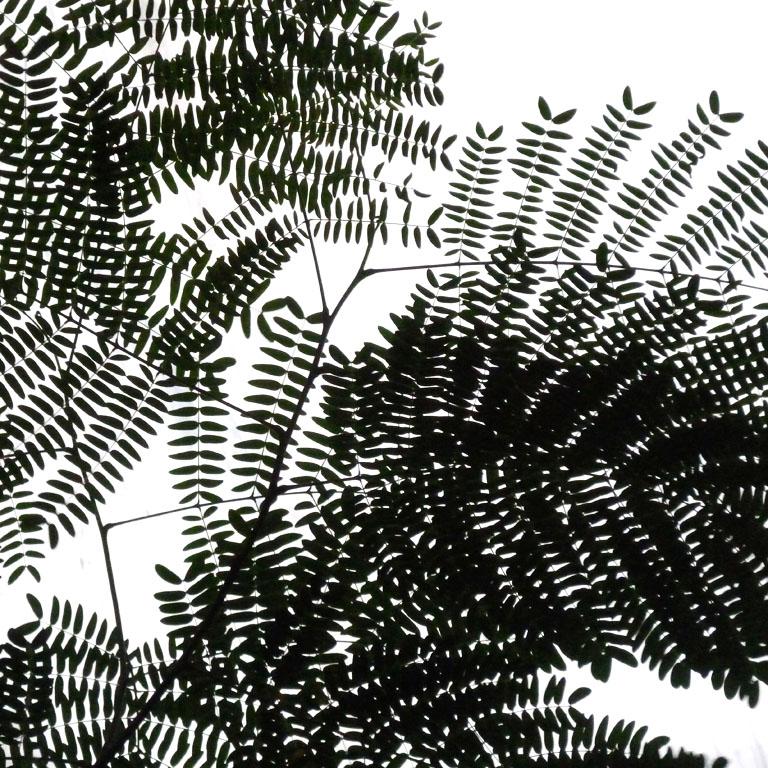 foto van bladeren